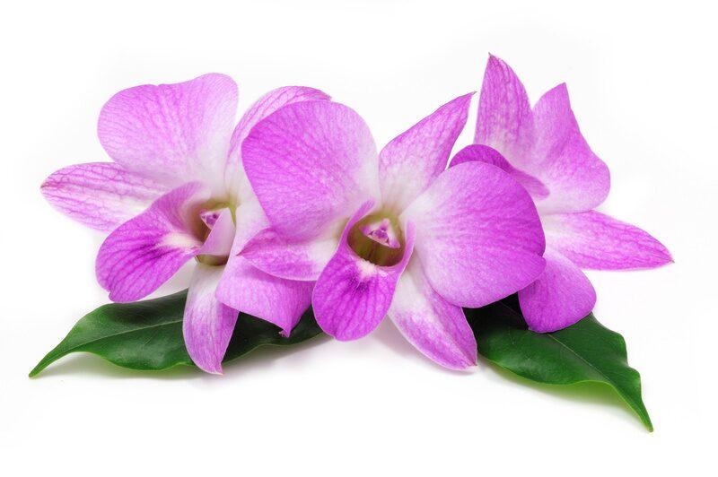 Лилия что означает этот цветок